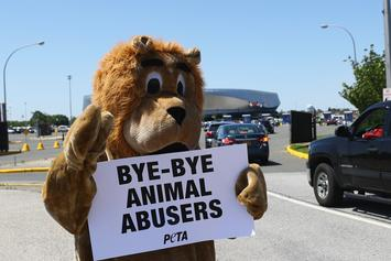 PETA Wants To Put An End To Animal Mascots After Sugar Bowl Incident